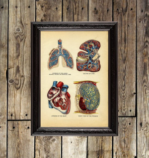 Interior of the heart,...