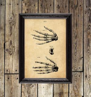 Bones of the hand. William...