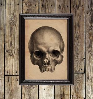 Skull, from treatise on...