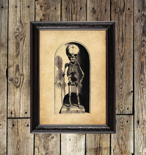 Skeleton Kid. Anatomical...